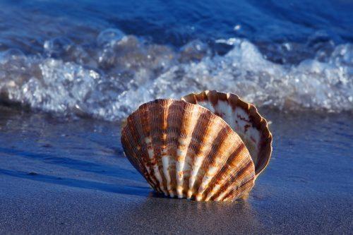 schelp op strand